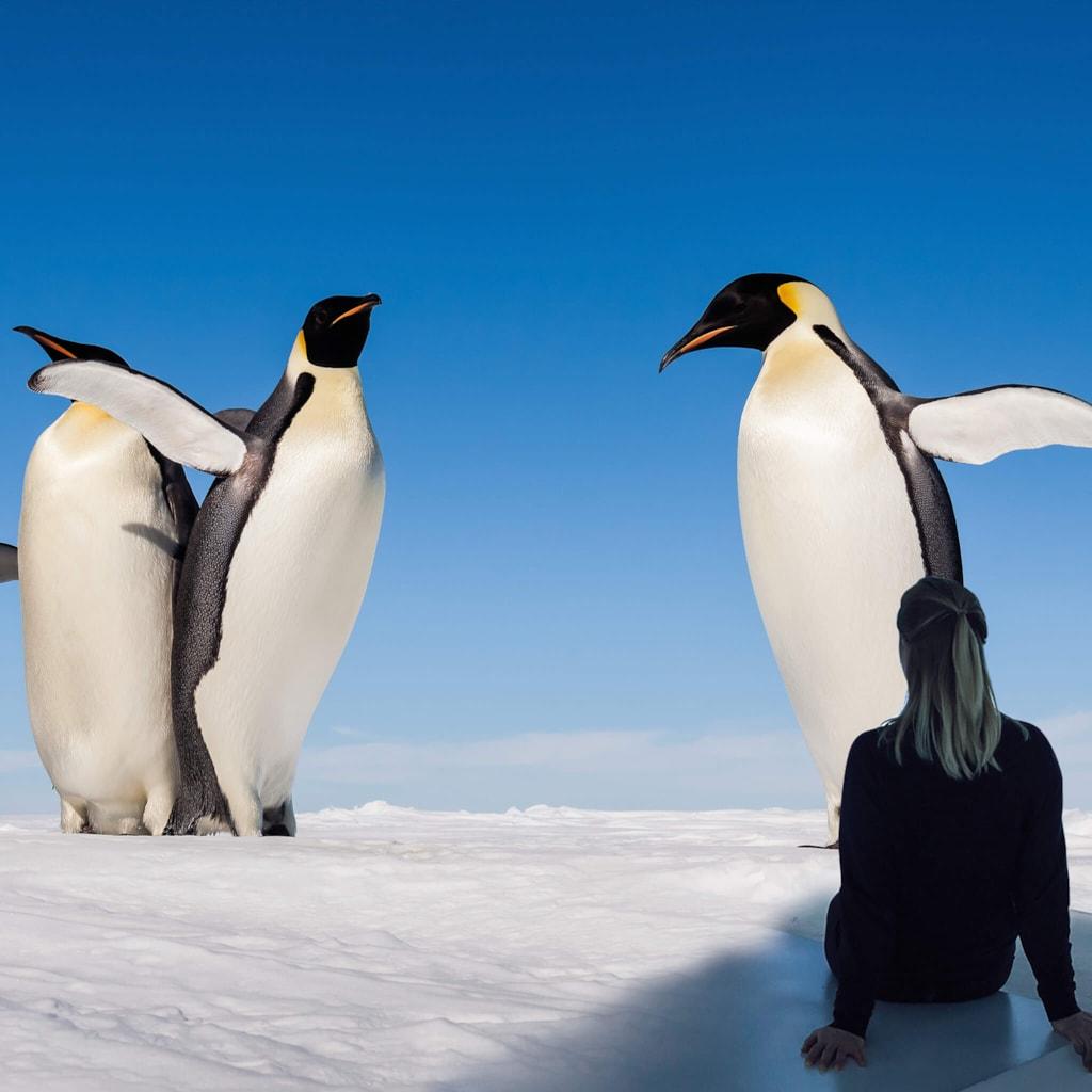 Antarctica - Brussels, Belgium
